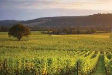 Denbies Wine Estate, Dorking